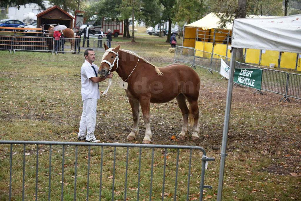 Concours Régional de chevaux de traits en 2017 - Trait COMTOIS - FAUVETTE DES BARDIS - 2