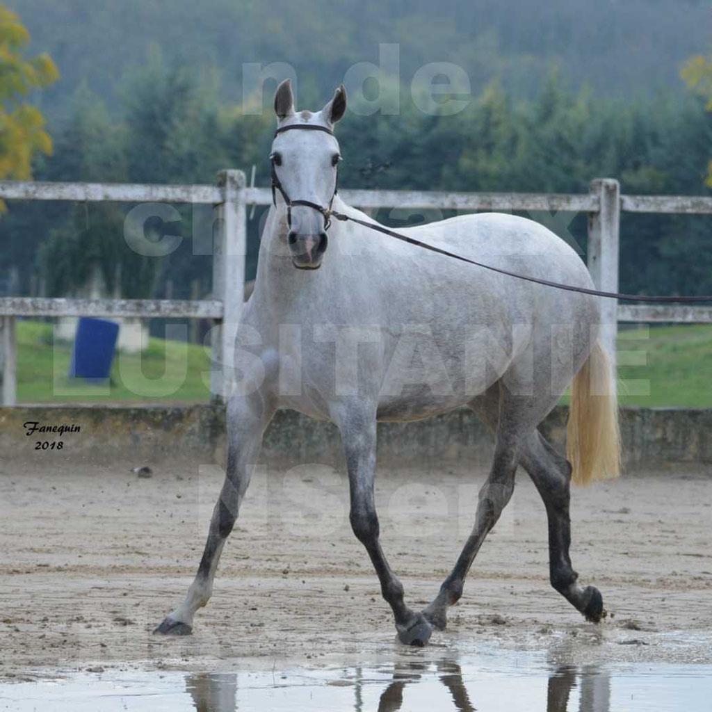 Confirmation de chevaux LUSITANIENS aux Haras d'UZES Novembre 2018 - DANAÏDE DU MOLE - 08