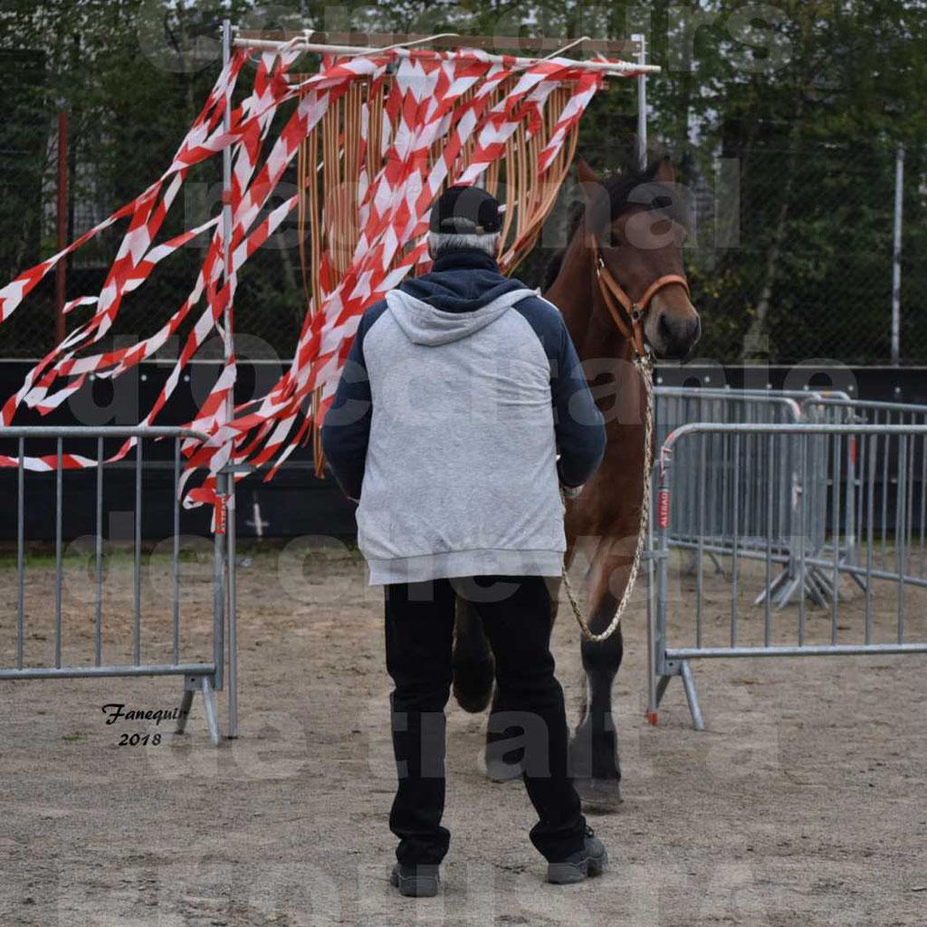 Concours Label Loisirs lors du concours Régional de chevaux de traits à REQUISTA en Octobre 2018 - 16