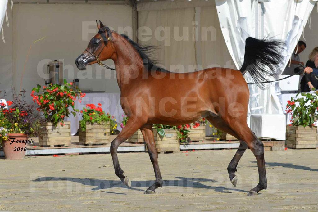 Championnat de FRANCE de chevaux Arabes à Pompadour en 2018 - BO AS ALEXANDRA - Notre Sélection - 28
