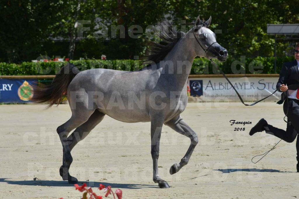 Championnat de FRANCE de chevaux Arabes à Pompadour en 2018 - SANIA DU CAYRON - Notre Sélection - 16