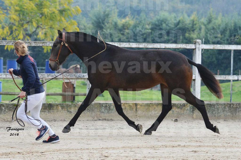 Confirmation de chevaux LUSITANIENS aux Haras d'UZES Novembre 2018 - LOUNA DU CASTEL - 06