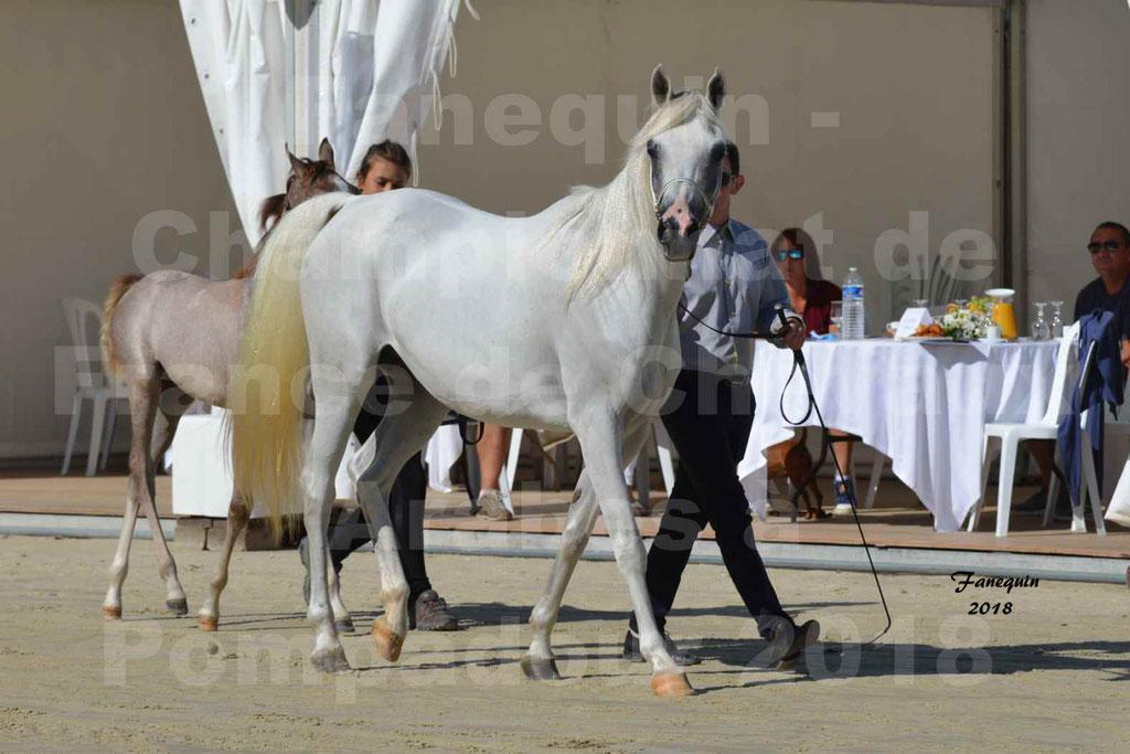 Championnat de FRANCE de chevaux Arabes à Pompadour en 2018 - ESTALIA - 01