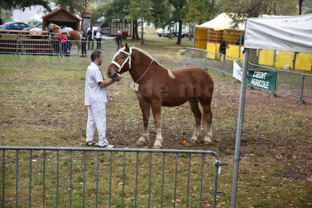 Concours Régional de chevaux de traits en 2017 - Trait COMTOIS - FAUVETTE DES BARDIS - 3