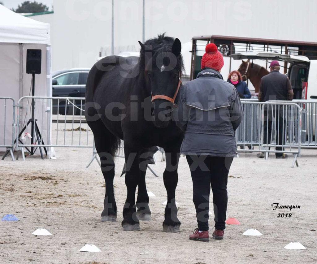 Concours Label Loisirs lors du concours Régional de chevaux de traits à REQUISTA en Octobre 2018 - 33