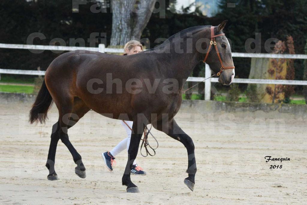 Confirmation de chevaux LUSITANIENS aux Haras d'UZES Novembre 2018 - LOUNA DU CASTEL - 12