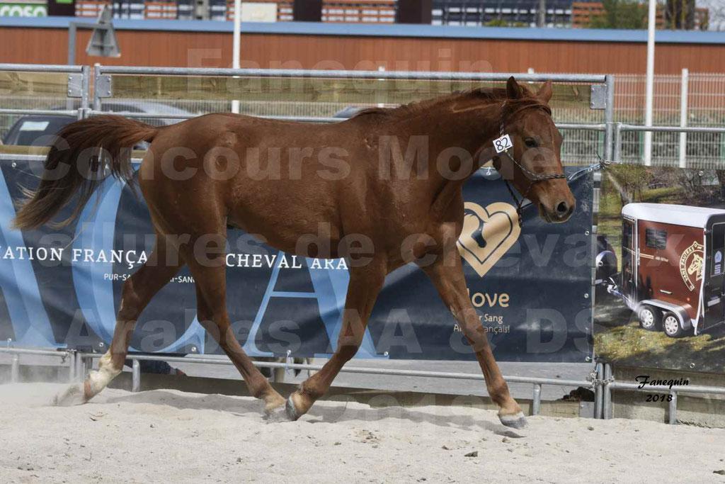 Concours d'élevage de Chevaux Arabes - Demi Sang Arabes - Anglo Arabes - ALBI les 6 & 7 Avril 2018 - FOXTROT DU GRIOU - Notre Sélection - 7