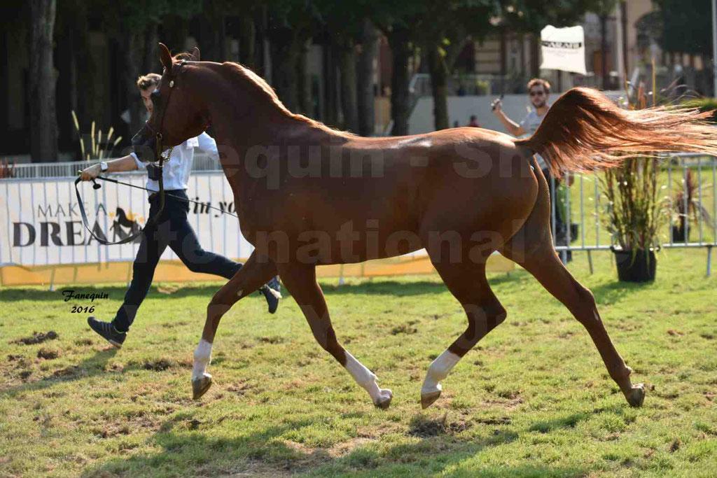 International Arabian Horse Show B de VICHY 2016 - DZHARI NUNKI - Notre Sélection - 31