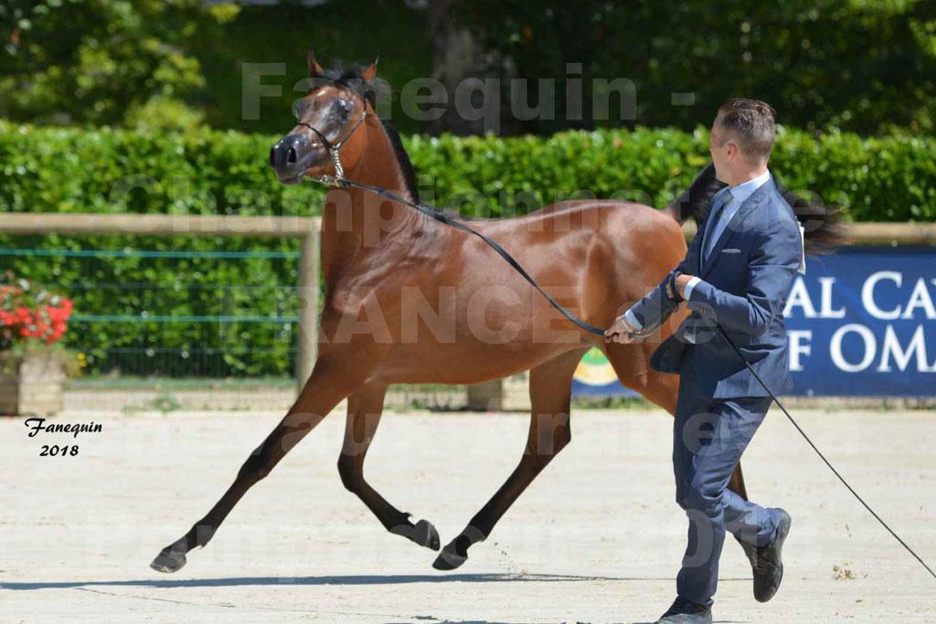 Championnat de FRANCE de chevaux Arabes à Pompadour en 2018 - BO AS ALEXANDRA - Notre Sélection - 12