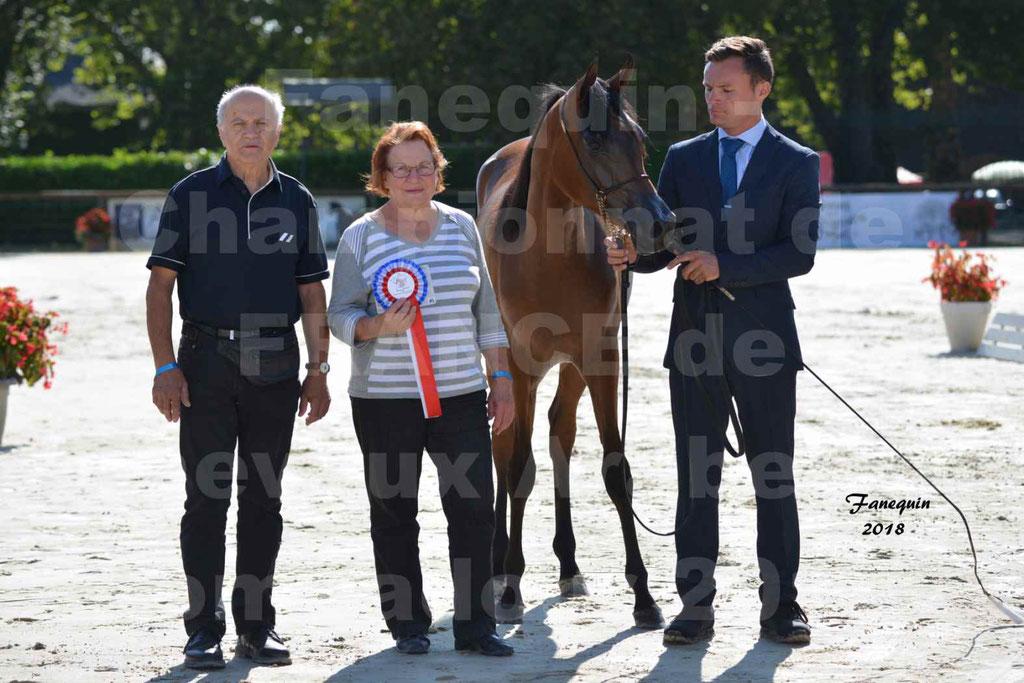Championnat de FRANCE de chevaux Arabes à Pompadour en 2018 - BO AS ALEXANDRA - Notre Sélection - 52