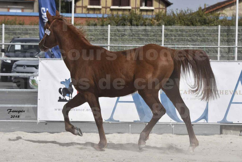 Concours d'élevage de Chevaux Arabes - Demi Sang Arabes - Anglo Arabes - ALBI les 6 & 7 Avril 2018 - FLEURON CONDO - Notre Sélection - 04