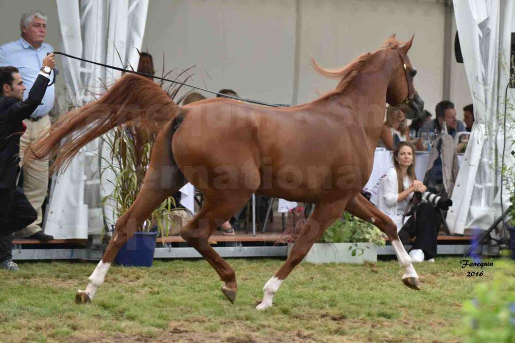 International Arabian Horse Show B de VICHY 2016 - DZHARI NUNKI - Notre Sélection - 16