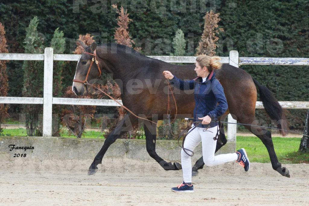 Confirmation de chevaux LUSITANIENS aux Haras d'UZES Novembre 2018 - LOUNA DU CASTEL - 09