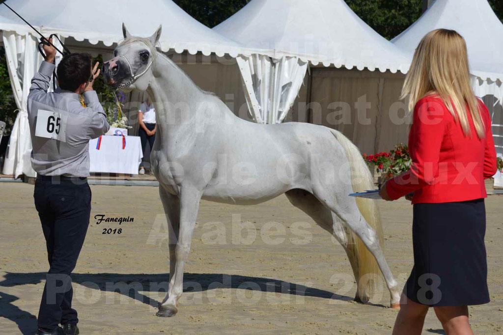 Championnat de FRANCE de chevaux Arabes à Pompadour en 2018 - ESTALIA - 33