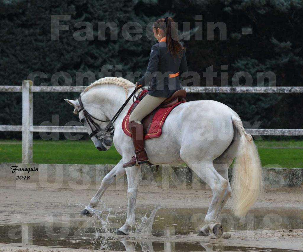 Confirmation de chevaux LUSITANIENS de Novembre 2018 - Étalon - ZIDANE