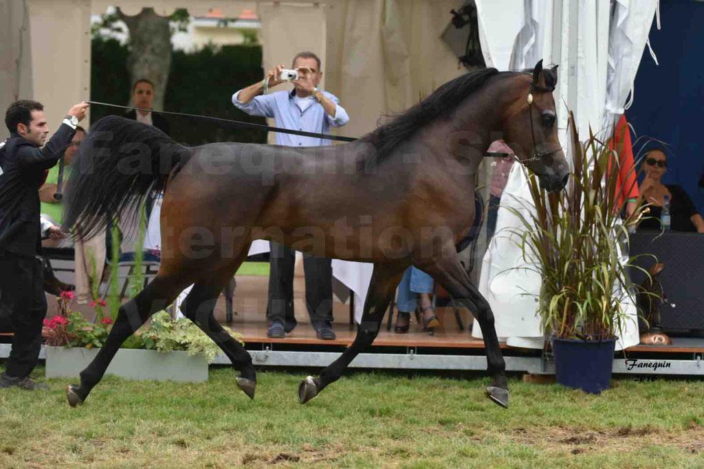 International Arabian Horse Show B de VICHY 2016 - MILLIAR - Notre Sélection - 07