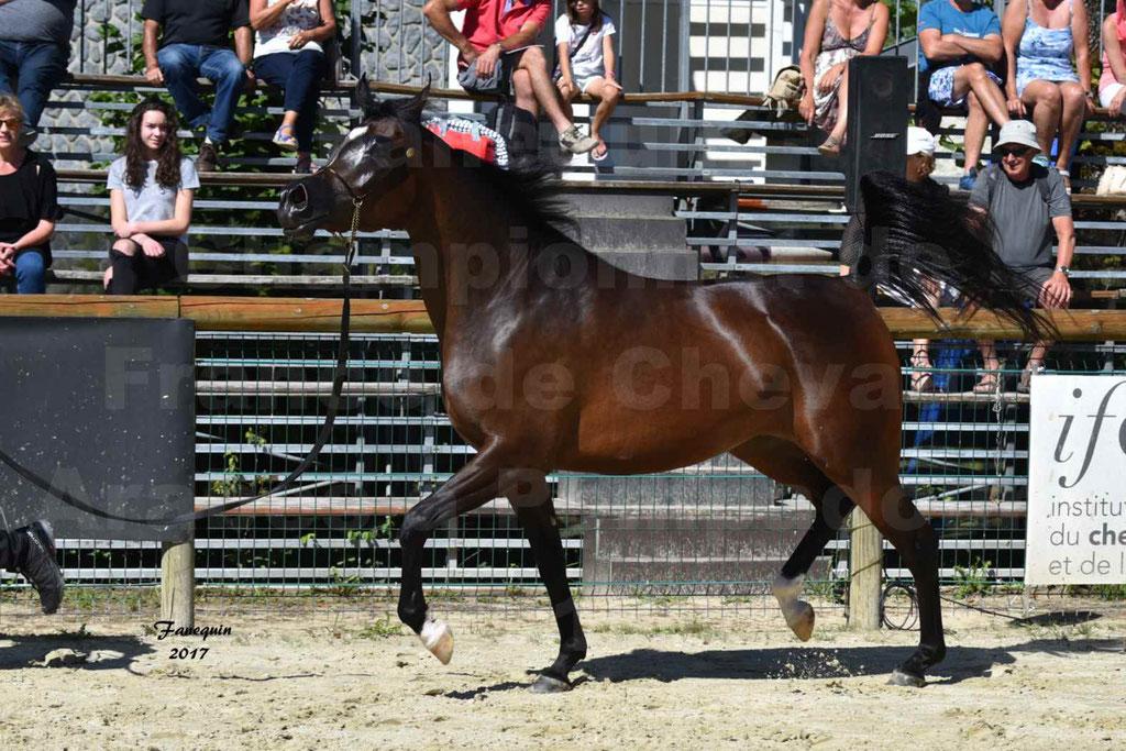 Championnat de France de chevaux Arabes à Pompadour les 19 & 20 Août 2017 - ESMAELIA AL HEVAN - 03