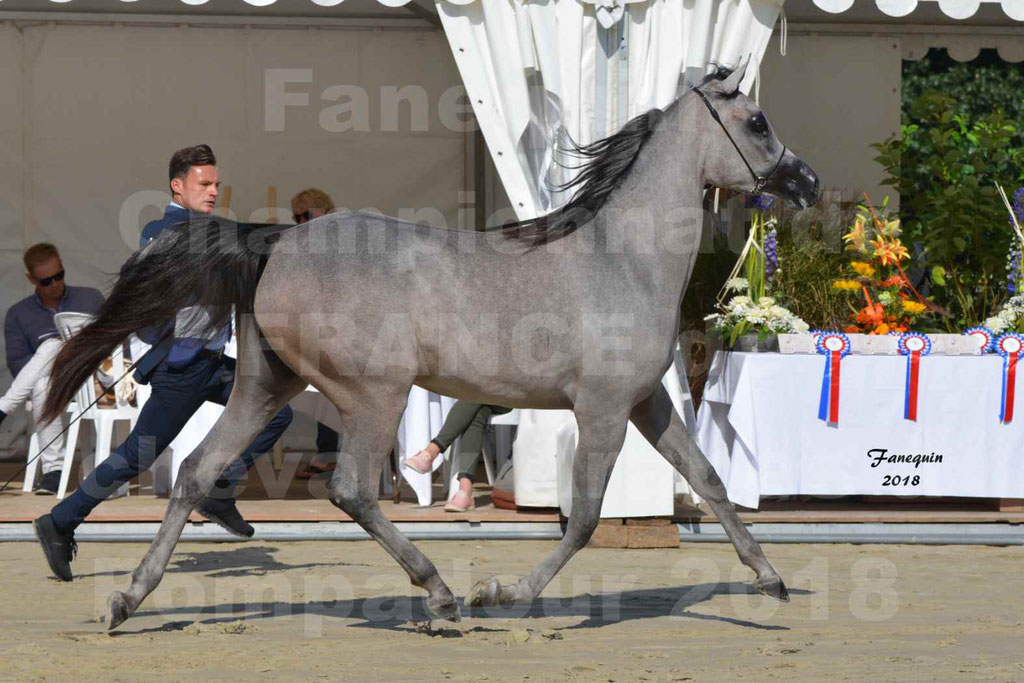 Championnat de FRANCE de chevaux Arabes à Pompadour en 2018 - SANIA DU CAYRON - Notre Sélection - 42