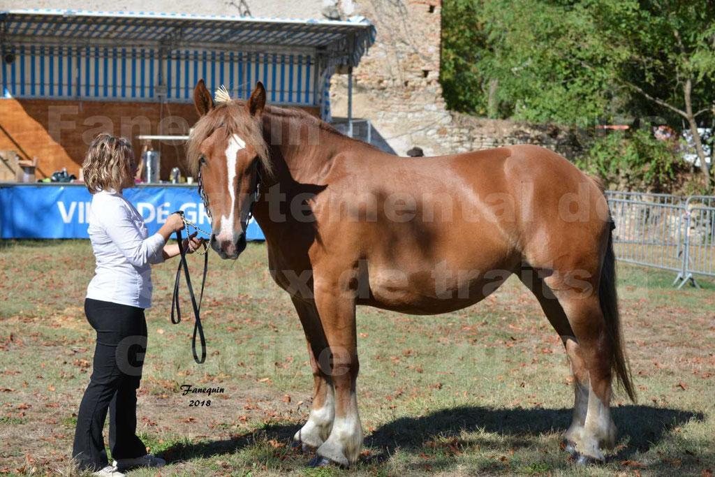 Concours départemental de chevaux de traits à GRAULHET en 2018 - Marjorie DEFRANCE - Notre Sélection - 1