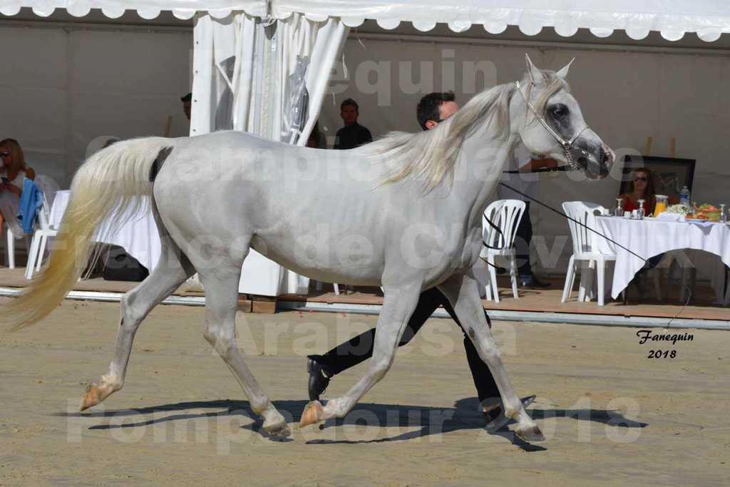 Championnat de FRANCE de chevaux Arabes à Pompadour en 2018 - ESTALIA - 30