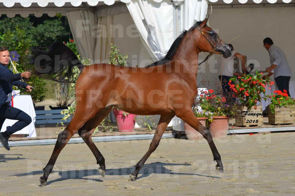 Championnat de FRANCE de chevaux Arabes à Pompadour en 2018 - BO AS ALEXANDRA - Notre Sélection - 38