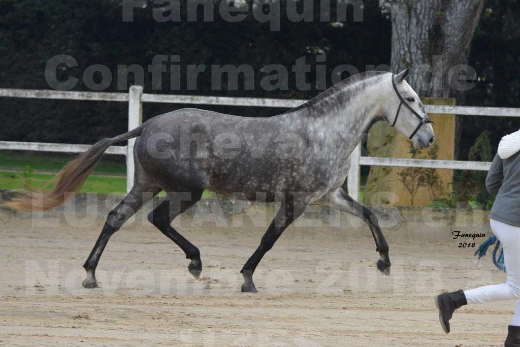 Confirmation de chevaux LUSITANIENS aux Haras d'UZES Novembre 2018 - JAVA DO REAL - 11