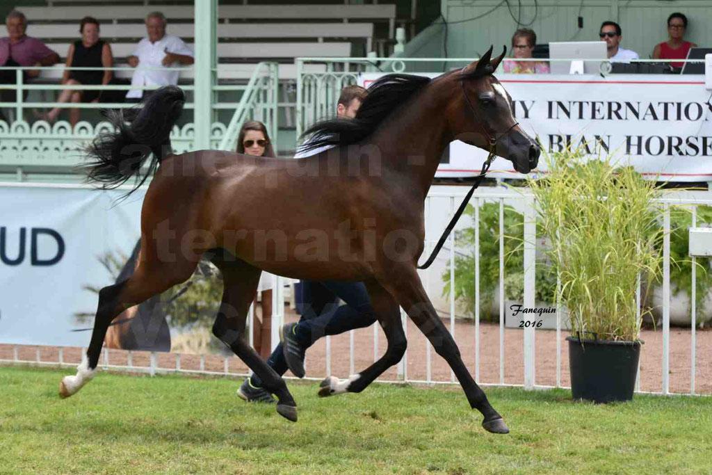 International Arabian Horse Show B de VICHY 2016 - ESMAELIA AL HEVAN - Notre Sélection - 06