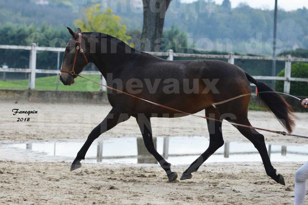 Confirmation de chevaux LUSITANIENS aux Haras d'UZES Novembre 2018 - LOUNA DU CASTEL - 18