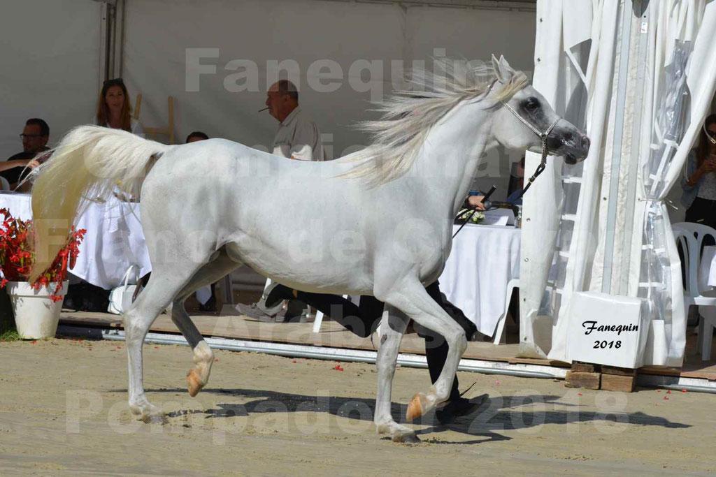 Championnat de FRANCE de chevaux Arabes à Pompadour en 2018 - ESTALIA - 11