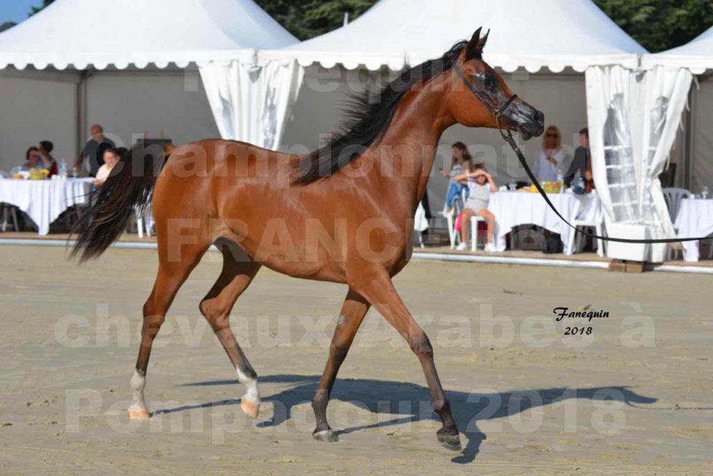 Championnat de FRANCE des chevaux Arabes à Pompadour en 2018 - SH CHARISMA - Notre Sélection - 03