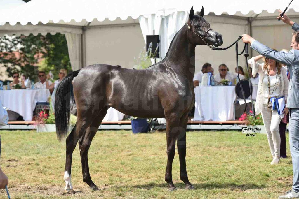 International Arabian Horse Show B de VICHY 2016 - ANNALISA ALIH - Notre Sélection - 22