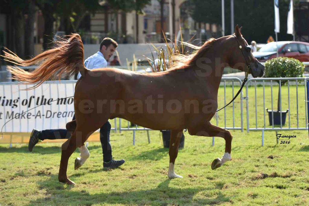 International Arabian Horse Show B de VICHY 2016 - DZHARI NUNKI - Notre Sélection - 35
