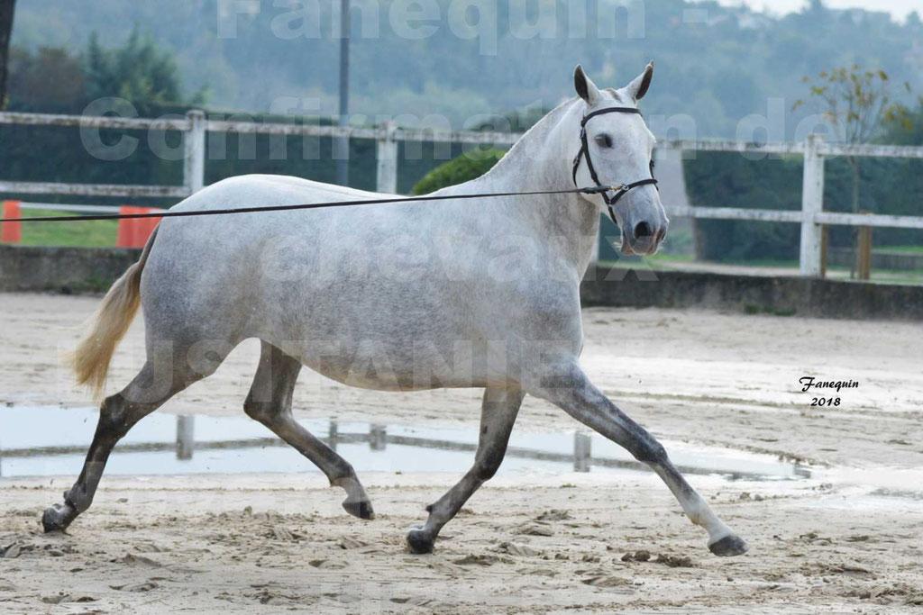 Confirmation de chevaux LUSITANIENS aux Haras d'UZES Novembre 2018 - DANAÏDE DU MOLE - 04