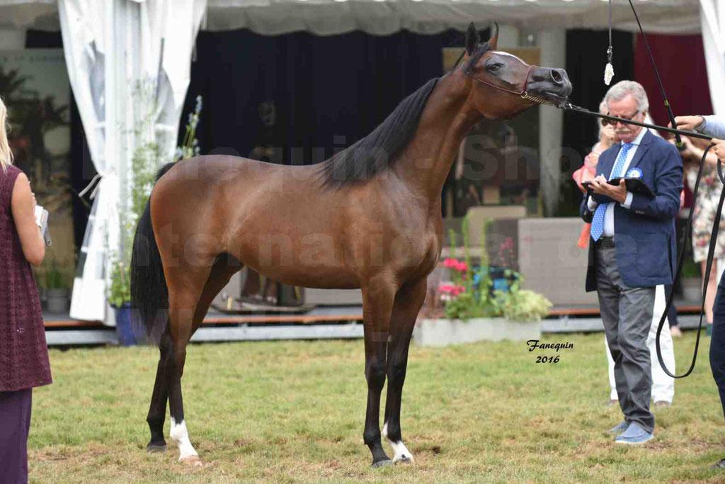 International Arabian Horse Show B de VICHY 2016 - ESMAELIA AL HEVAN - Notre Sélection - 16