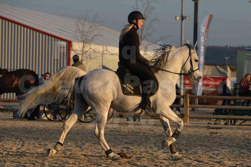 Cheval Passion 2016 - Présentation extérieure de chevaux Arabes montés - 24
