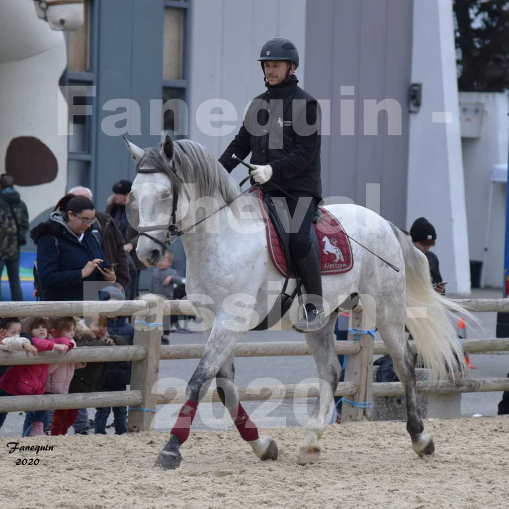 Cheval Passion 2020 - Elevage de chevaux LIPIZZANS - Elevage PHILLIP