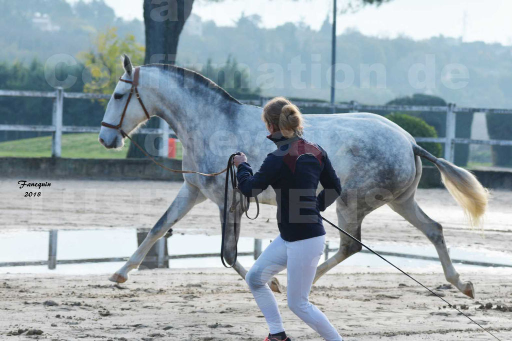 Confirmation de chevaux LUSITANIENS aux Haras d'UZES Novembre 2018 - LUTECE DU CASTEL - 04