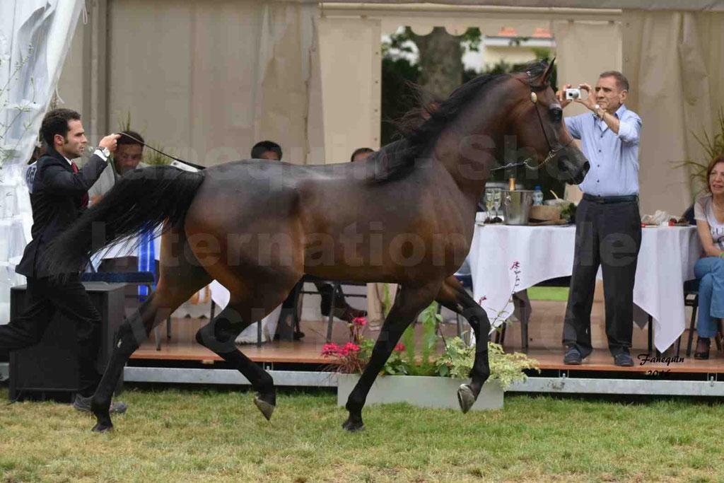 International Arabian Horse Show B de VICHY 2016 - MILLIAR - Notre Sélection - 06