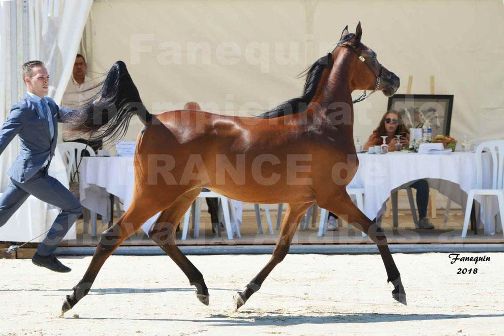 Championnat de FRANCE de chevaux Arabes à Pompadour en 2018 - BO AS ALEXANDRA - Notre Sélection - 04