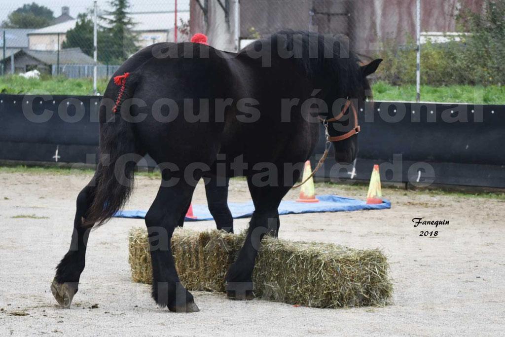 Concours Label Loisirs lors du concours Régional de chevaux de traits à REQUISTA en Octobre 2018 - 35