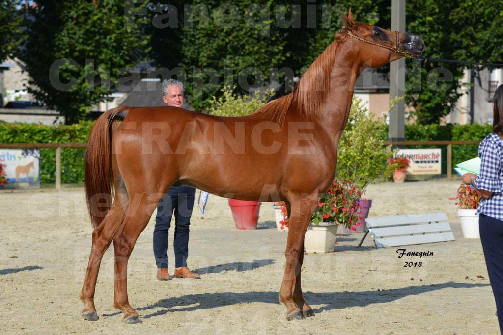 Championnat de FRANCE de chevaux Arabes à Pompadour 2018 - MAAMAR ISHANE - Notre Sélection - 20