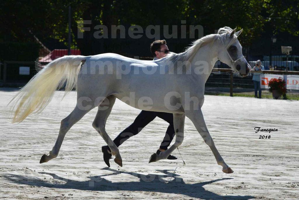 Championnat de FRANCE de chevaux Arabes à Pompadour en 2018 - ESTALIA - 27