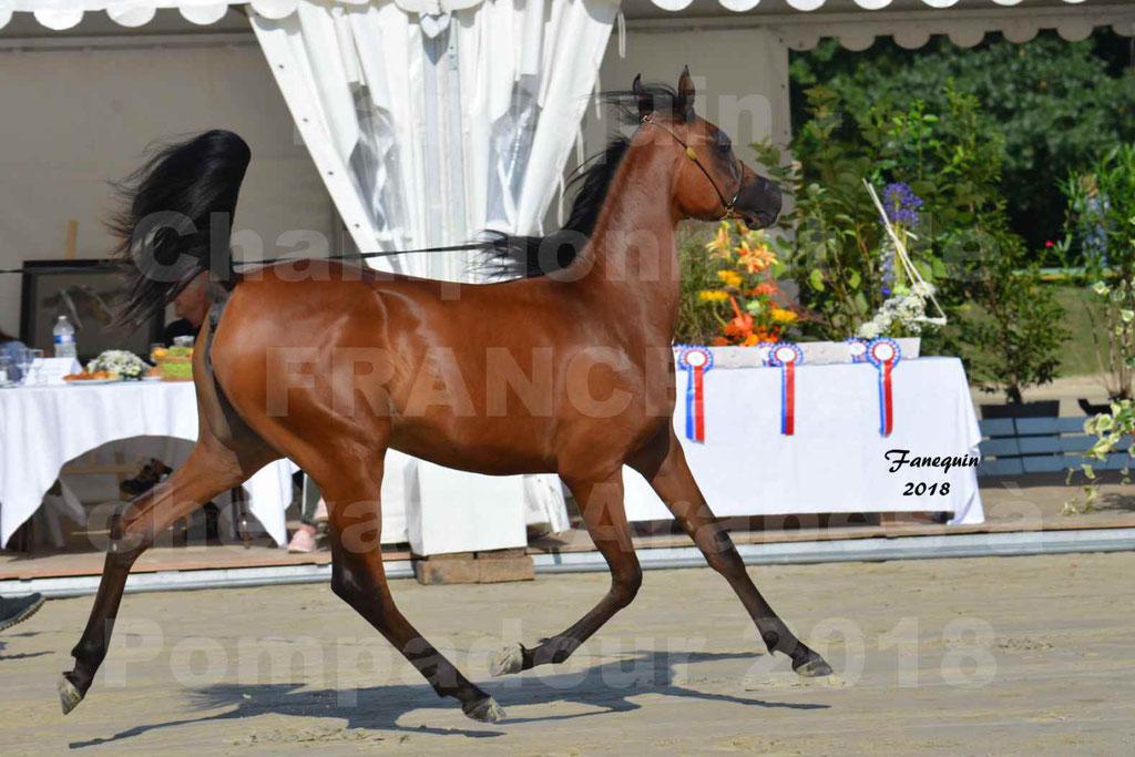 Championnat de FRANCE de chevaux Arabes à Pompadour en 2018 - BO AS ALEXANDRA - Notre Sélection - 22