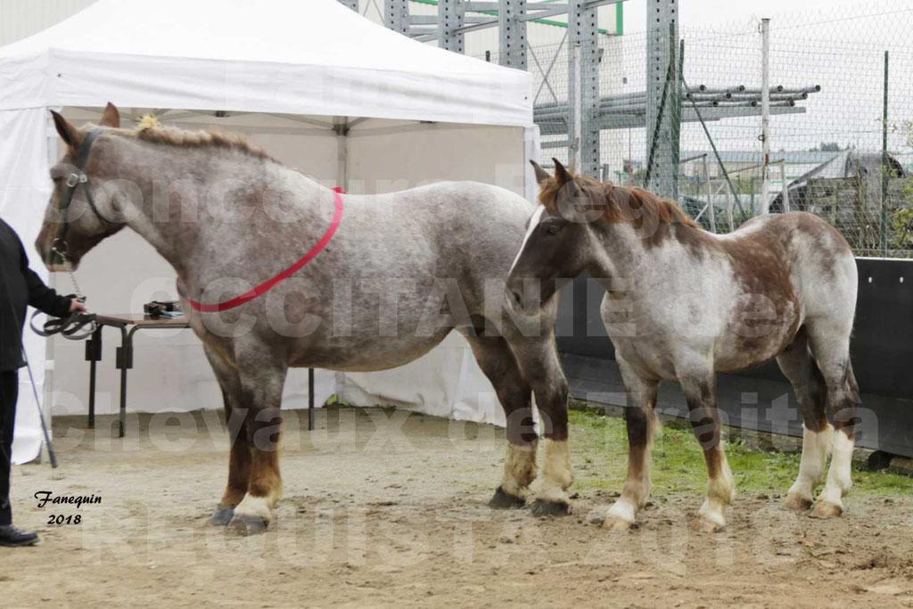 """Concours Régional """"OCCITANIE"""" Modèles et Allures de chevaux de trait à REQUISTA en 2018 - PORTRAITS - 25"""