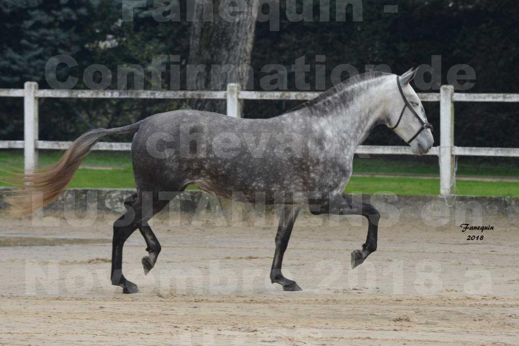 Confirmation de chevaux LUSITANIENS aux Haras d'UZES Novembre 2018 - JAVA DO REAL - 10