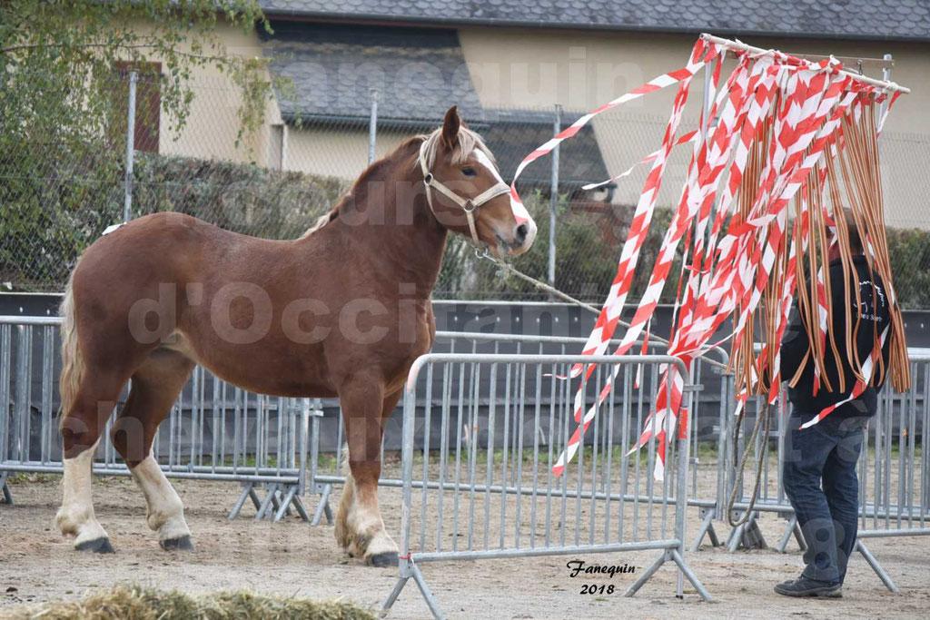 Concours Label Loisirs lors du concours Régional de chevaux de traits à REQUISTA en Octobre 2018 - 43