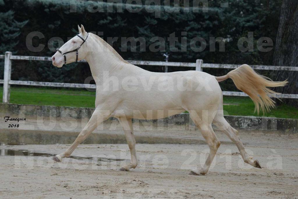 Confirmation de chevaux LUSITANIENS aux Haras d'UZES Novembre 2018 - LOLIBLOU - 11