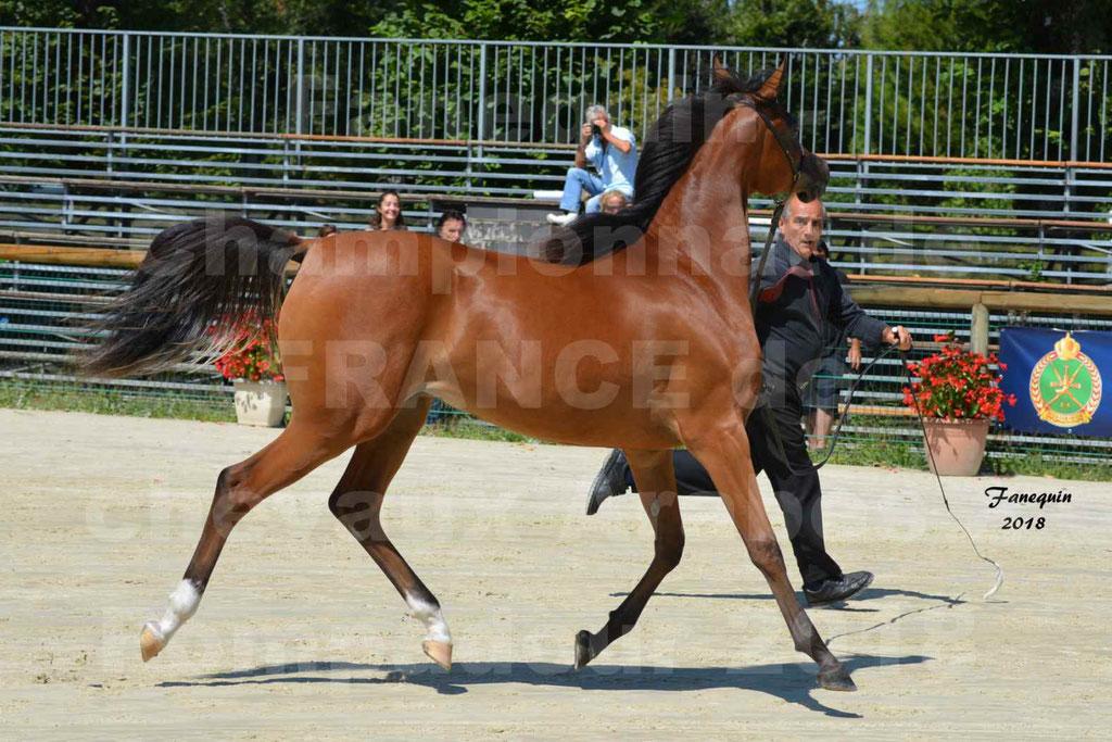 Championnat de FRANCE des chevaux Arabes à Pompadour en 2018 - SH CHARISMA - Notre Sélection - 23
