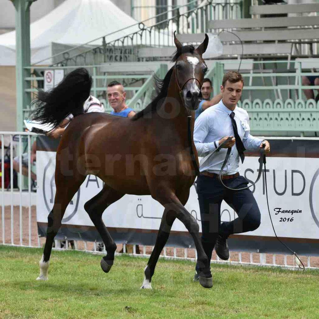 International Arabian Horse Show B de VICHY 2016 - ESMAELIA AL HEVAN - Notre Sélection - 03
