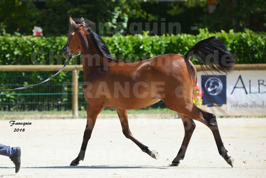 Championnat de FRANCE de chevaux Arabes à Pompadour en 2018 - BO AS ALEXANDRA - Notre Sélection - 10